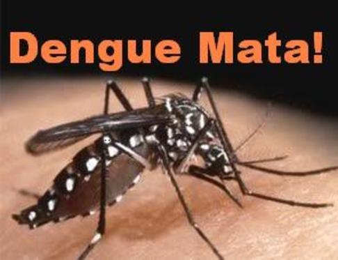 como se prevenir da dengue - dengue mata