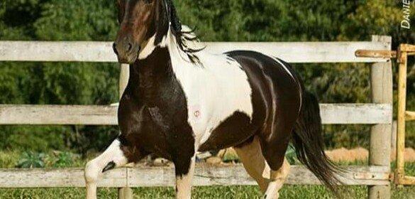 Equinos e os seus cuidados